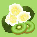 Kiwis fruit and flowers slices on an green background Royalty Free Stock Image