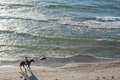 KLAIPEDA, LITHUANIA - SEPTEMBER 28, 2012: Woman is riding with horse on the beach of Baltic Sea Royalty Free Stock Photo