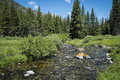 Klarer rocky mountain stream Lizenzfreie Stockbilder