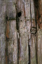 Knarled wooden gate post Royalty Free Stock Photo