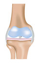 Knee joint diagram a with high levels of detailed Stock Photo