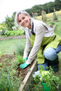 Kneeling woman gardening senior planting aromatic herbs in kitchen garden Royalty Free Stock Photos