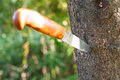 Knife stuck in tree sharp with wooden handle Royalty Free Stock Photo