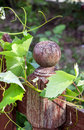 The knob of a fence covered by leaves Stock Photo