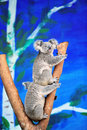 Koala is an arboreal herbivorous marsupial native to australia it is easily recognisable by its stout tailless body round fluffy Stock Photography