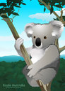 Koala sitting in a gum tree in Australia Royalty Free Stock Photo