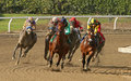 Kobe s back wins the san vincente stakes arcadia ca feb field for heads down homestretch at historic santa anita park eventual Stock Images