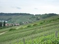 Kochertal at summer time rural scenery with vineyards in southern germany named Stock Images
