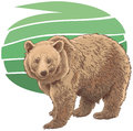 Kodiak bear illustration of a Royalty Free Stock Image