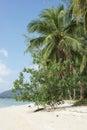 Koh samui thailand asia beach on southeast Royalty Free Stock Photography