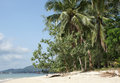 Koh samui thailand asia beach on southeast Royalty Free Stock Images