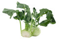 Kohlrabi in front of white background Royalty Free Stock Photography
