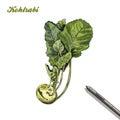 Kohlrabi. harvesting. colored illustration made by hand.