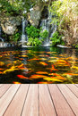 Koi fish in pond at the garden with a waterfall Royalty Free Stock Photo