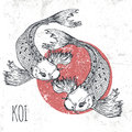 Koi fish vector illustration. Print for t-shirt graphic Royalty Free Stock Photo