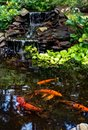 Koi pond with koi fish Royalty Free Stock Photo