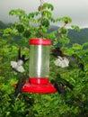 Kolibrie feeders / Hummingbird feeders; Minca, Santa Marta Mount