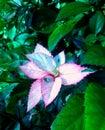 Kolorowe liści Obraz Stock