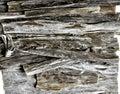 Kombu algae , seaweed: edible kelp Royalty Free Stock Photo