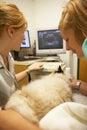 Kot ma ultradźwięku obraz cyfrowego przy weterynarzami Obrazy Stock