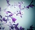 Koude bloemen Royalty-vrije Stock Fotografie