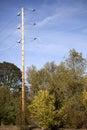 Kraftledningar, Trees och blåttSky Arkivfoton