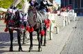 Krakow horses Royalty Free Stock Photo