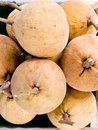 Krathon or santol is a sweet tropical fruit that is commonly found in southeast asia Stock Photo