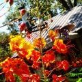 Krause wiosny Zdjęcie Royalty Free