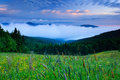 Krkonose mountain, flowered meadow in the spring, forest hills, misty morning with fog and beautiful clouds, peak of Snezka hill i Royalty Free Stock Photo