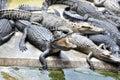 Krokodillantgård Royaltyfri Foto