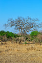 Kruger National Park, Limpopo and Mpumalanga provinces, South Africa