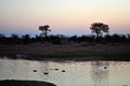 Kruger National Park, Limpopo and Mpumalanga provinces, South Africa, safari, elephant, landscape, nature
