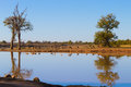 Kruger National Park, reflections on lake Royalty Free Stock Photo