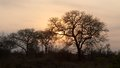 Kruger Park Sunrise Royalty Free Stock Photo