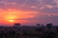 Kruger Sunrise Royalty Free Stock Photo