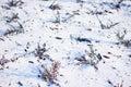 Krzaki w śniegu Obraz Stock