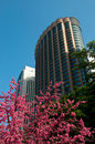 Kuala lumpur city with flower tree Royalty Free Stock Photography