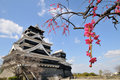 Kumamoto castle and Japanese apricot Royalty Free Stock Photo