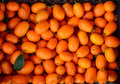 Kumkquat fortunella margarita very aromatic oval kumquat or nagami kumquat citrus japonica or southern fruit rich in vitamins a b Royalty Free Stock Image
