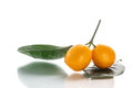 Kumquat Fotografia Royalty Free