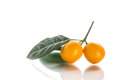 Kumquat sweet citrus fruits closeup on white Royalty Free Stock Photography