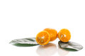 Kumquat sweet citrus fruits closeup on white Stock Photography