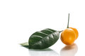 Kumquat sweet citrus fruits closeup on white Stock Image