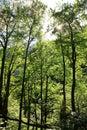 Kvacianska dolina - valley in region Liptov, Slovakia