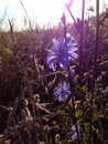 Kwiatu łąki gdzieś wiosna drewna Obraz Stock