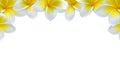 Kwiatu tła frame granica Zdjęcia Royalty Free
