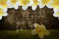 Kwiatu tła frame granica Obraz Royalty Free