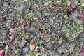 Kwieciści background- jesień kwiaty i ziemia Zdjęcia Royalty Free