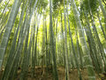Kyoto bamboo forest Royalty Free Stock Photo